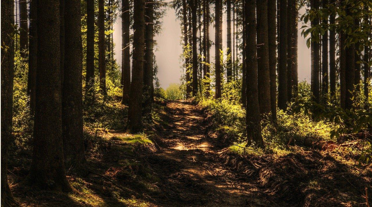 RUMwandern in der Dresdner Heide