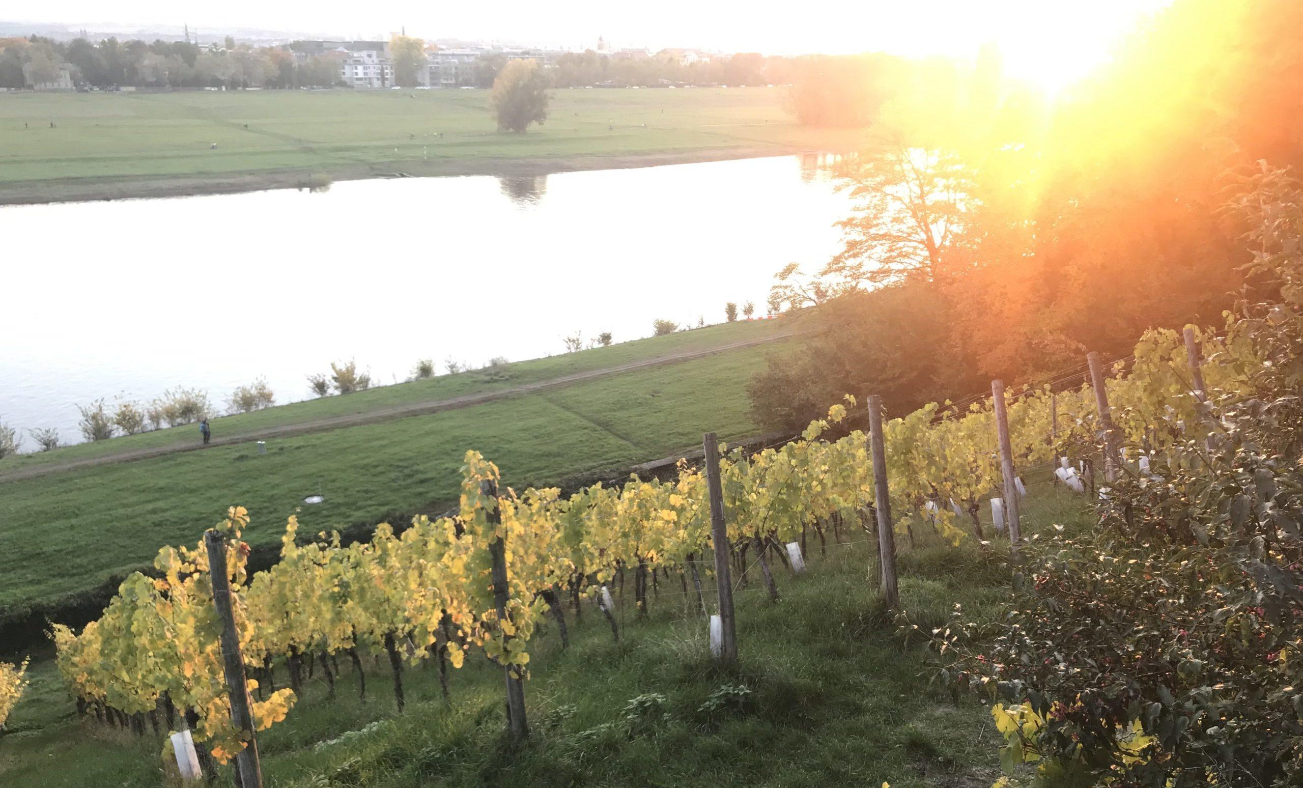Whisky trifft spanischen Wein am Albrechtsberg